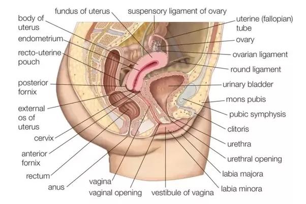 sesso anale per sesso vaginale