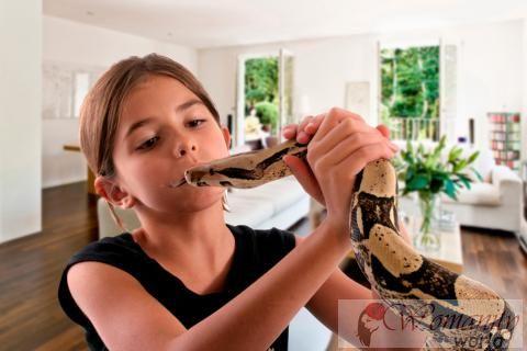 Un serpente come animale domestico rischi e suggerimenti for Suggerimenti per la costruzione della propria casa